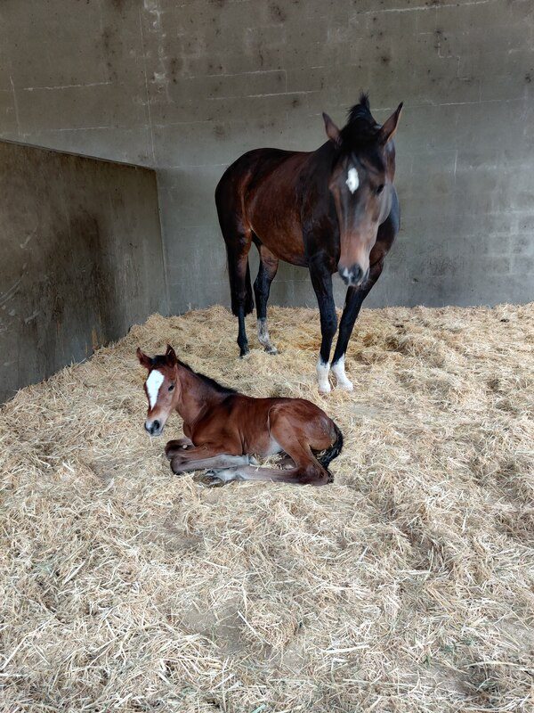 Mare and foal in a stable at Retford Equine Veterinary Clinic.